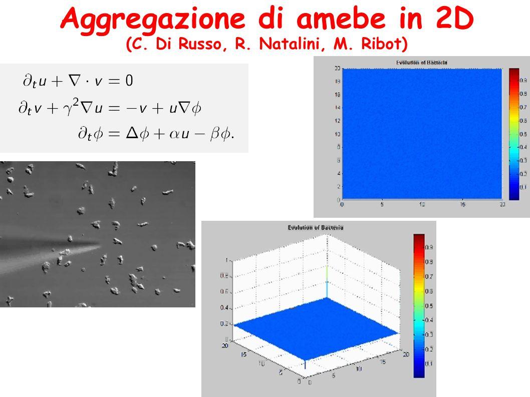 Aggregazione di amebe in 2D (C. Di Russo, R. Natalini, M. Ribot)