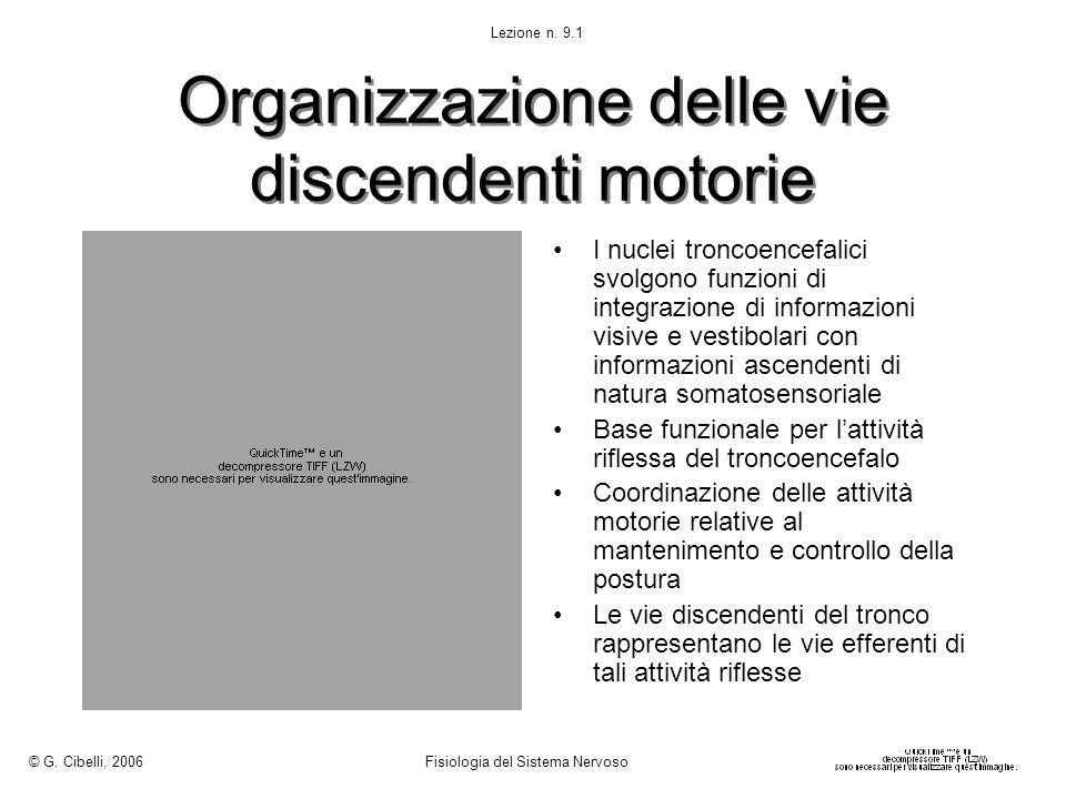 Organizzazione delle vie discendenti motorie
