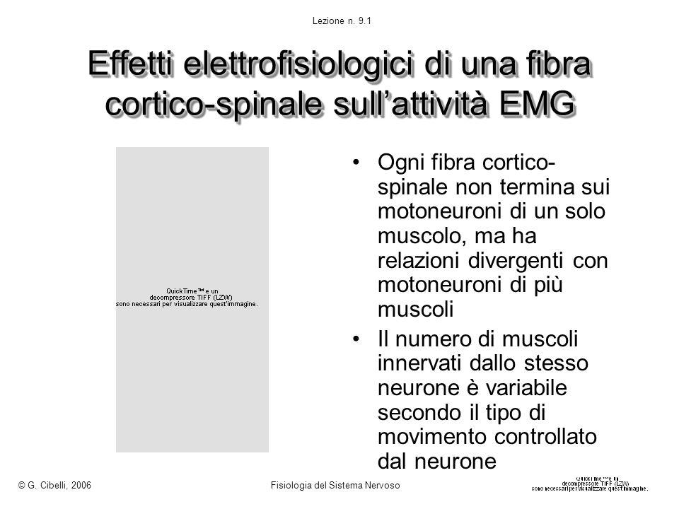 © G. Cibelli, 2006 Fisiologia del Sistema Nervoso. Lezione n. 9.1. Effetti elettrofisiologici di una fibra cortico-spinale sull'attività EMG.