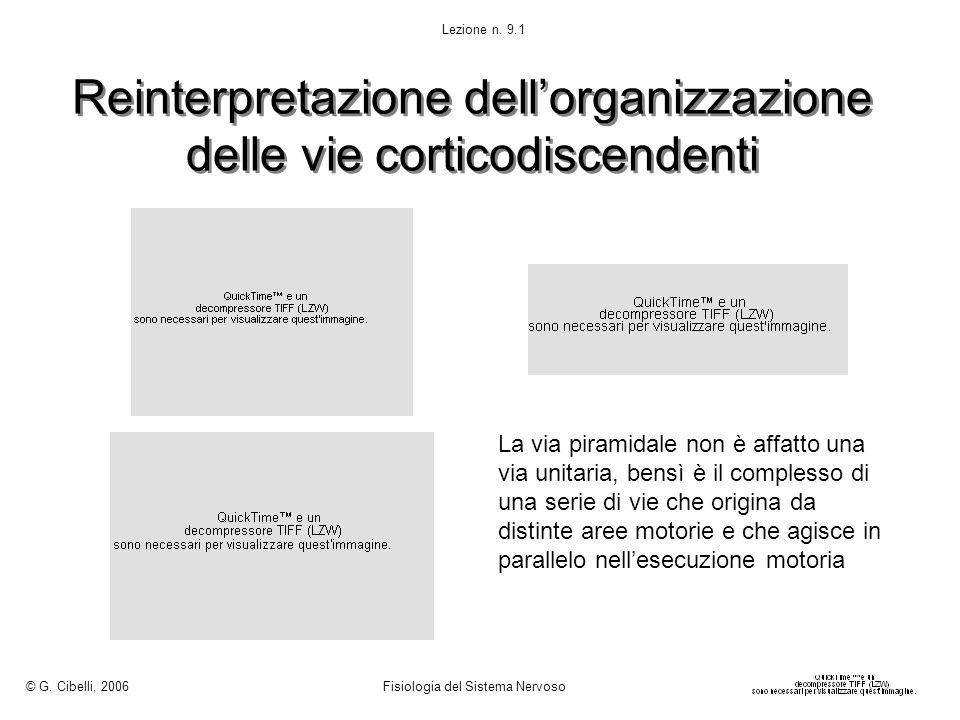 Reinterpretazione dell'organizzazione delle vie corticodiscendenti