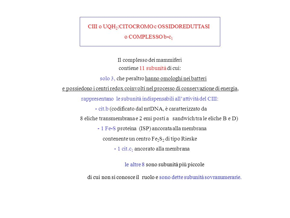 CIII o UQH2:CITOCROMO c OSSIDOREDUTTASI o COMPLESSO b-c1