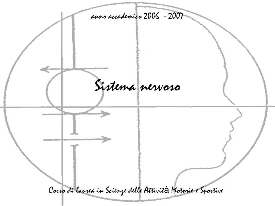 Sistema nervoso anno accademico 2006 - 2007