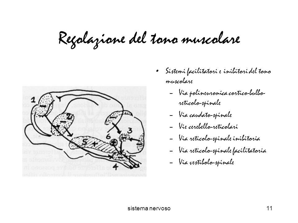 Regolazione del tono muscolare