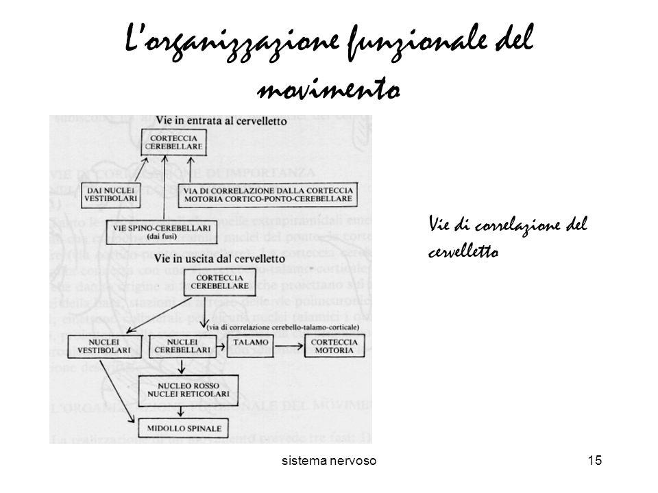 L'organizzazione funzionale del movimento