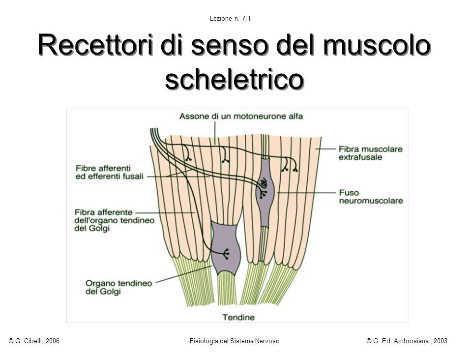 Recettori di senso del muscolo scheletrico