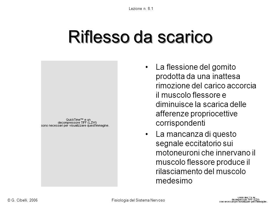 © G. Cibelli, 2006 Fisiologia del Sistema Nervoso. Lezione n. 8.1. Riflesso da scarico.