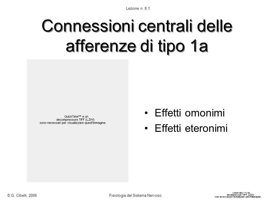 Connessioni centrali delle afferenze di tipo 1a