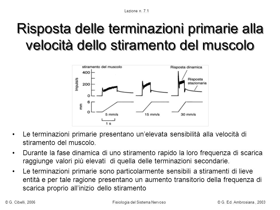 Lezione n. 7.1 © G. Cibelli, 2006. Fisiologia del Sistema Nervoso. © G. Ed. Ambrosiana , 2003.