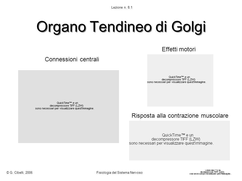 Organo Tendineo di Golgi