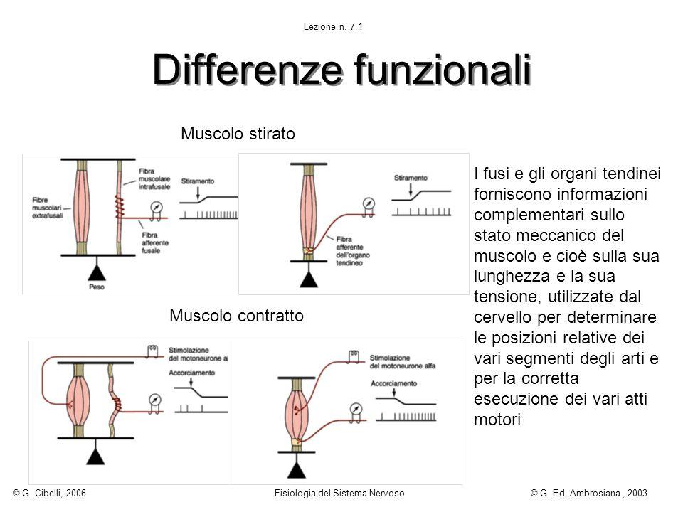 Differenze funzionali