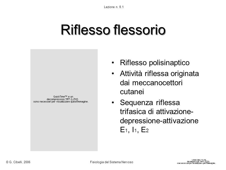Riflesso flessorio Riflesso polisinaptico