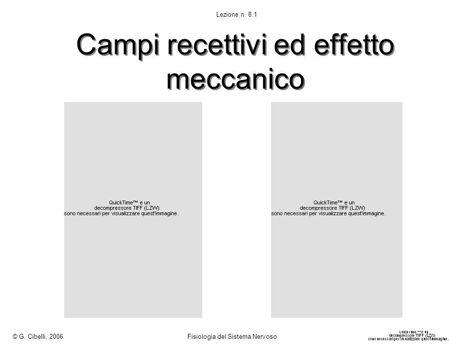 Campi recettivi ed effetto meccanico