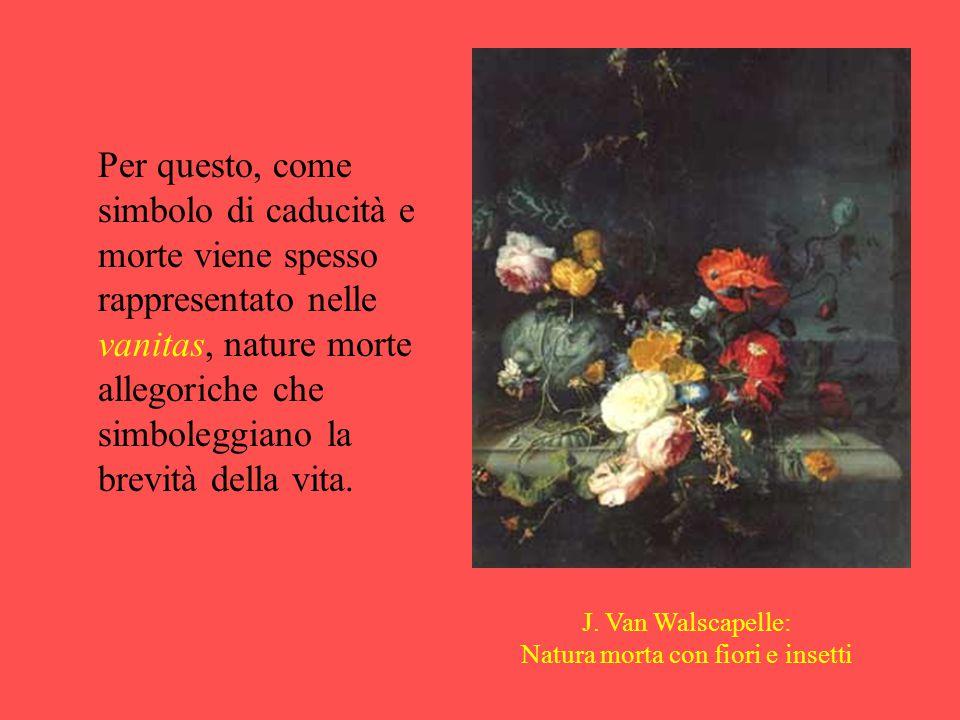 Natura morta con fiori e insetti
