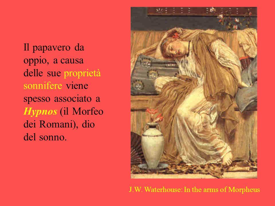 Il papavero da oppio, a causa delle sue proprietà sonnifere viene spesso associato a Hypnos (il Morfeo dei Romani), dio del sonno.