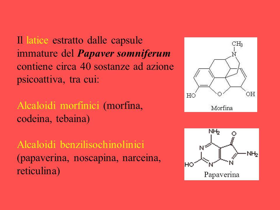 Alcaloidi morfinici (morfina, codeina, tebaina)