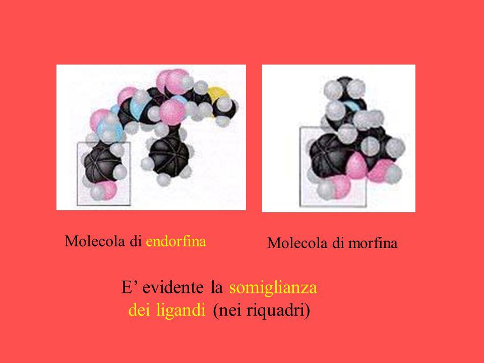 E' evidente la somiglianza dei ligandi (nei riquadri)