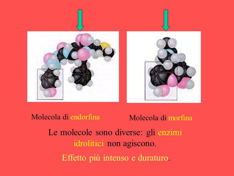 Le molecole sono diverse: gli enzimi idrolitici non agiscono.