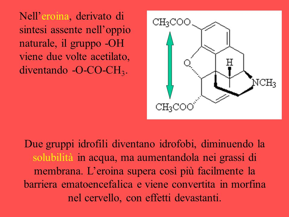 Nell'eroina, derivato di sintesi assente nell'oppio naturale, il gruppo -OH viene due volte acetilato, diventando -O-CO-CH3.