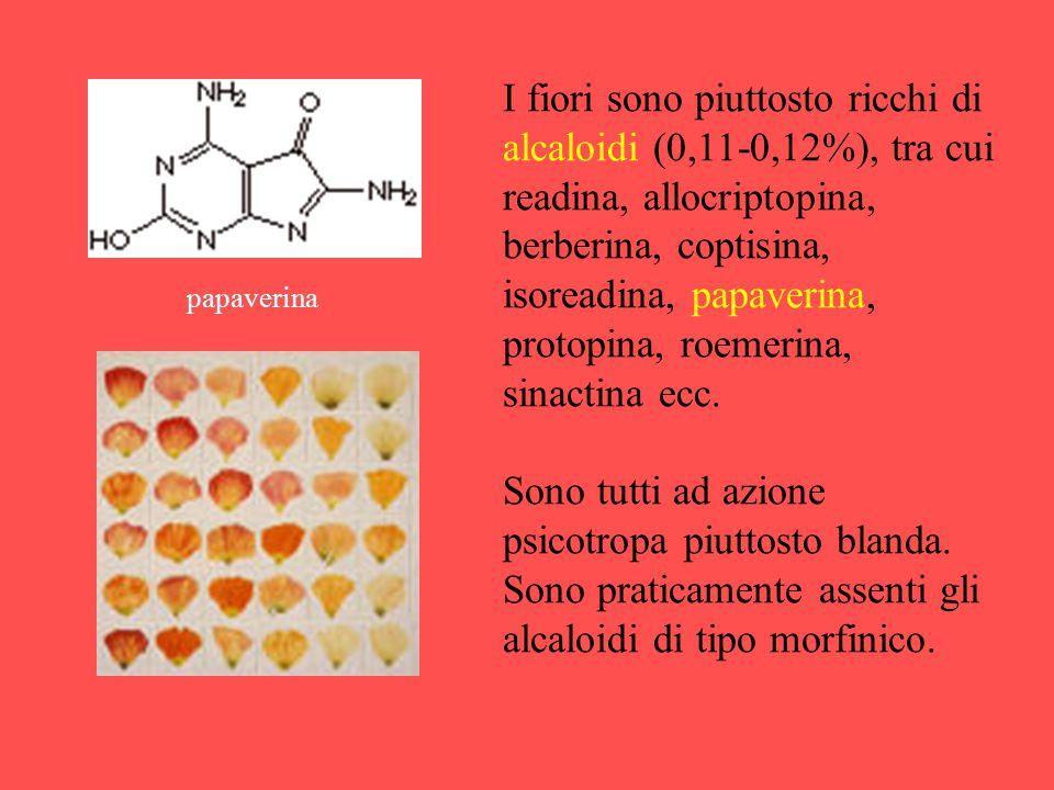 I fiori sono piuttosto ricchi di alcaloidi (0,11-0,12%), tra cui readina, allocriptopina, berberina, coptisina, isoreadina, papaverina, protopina, roemerina, sinactina ecc.