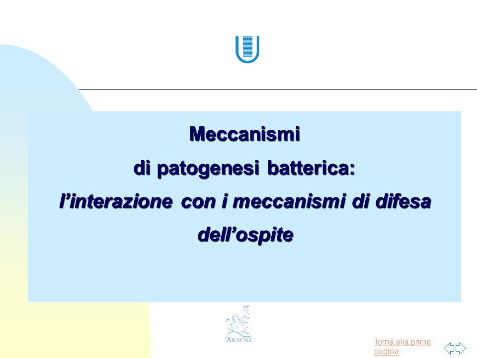 Meccanismi di patogenesi batterica: l'interazione con i meccanismi di difesa dell'ospite