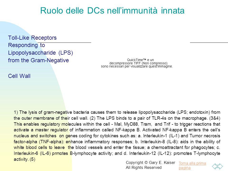 Ruolo delle DCs nell'immunità innata