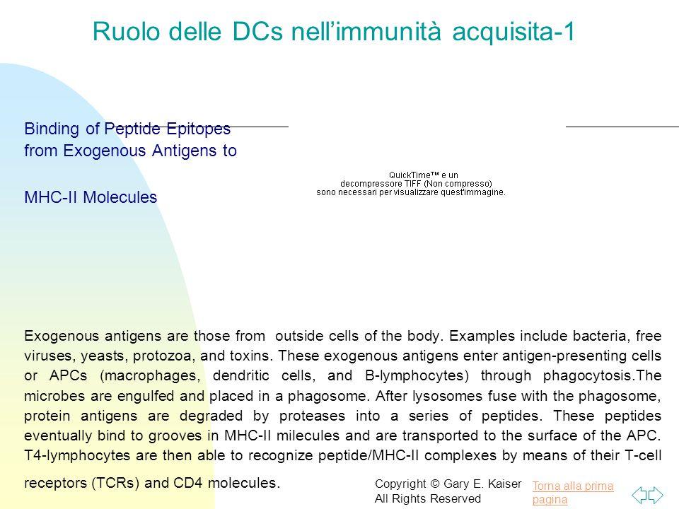 Ruolo delle DCs nell'immunità acquisita-1