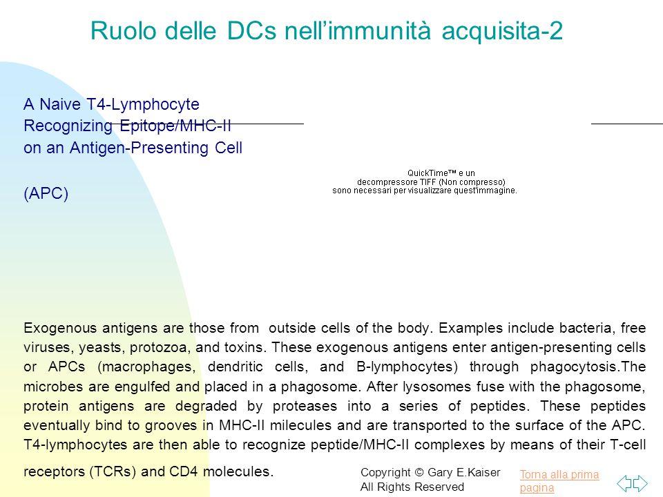 Ruolo delle DCs nell'immunità acquisita-2
