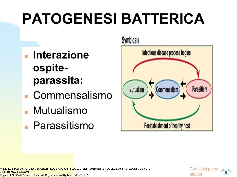 PATOGENESI BATTERICA Interazione ospite-parassita: Commensalismo