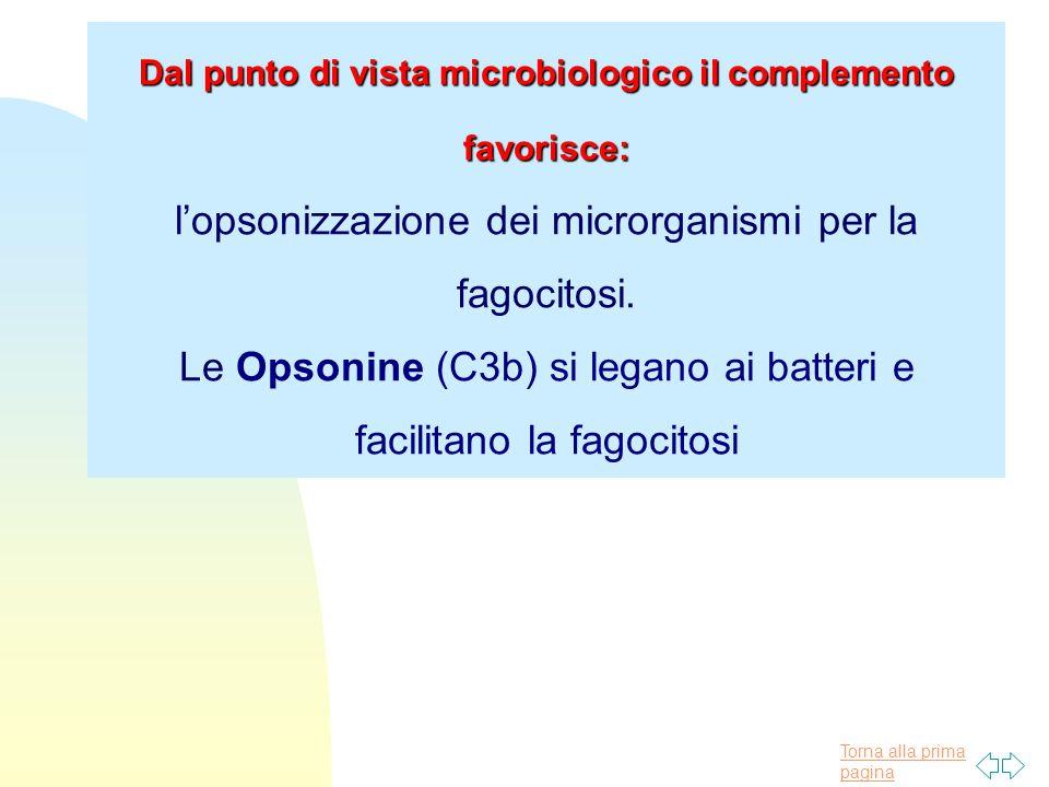 Dal punto di vista microbiologico il complemento favorisce: