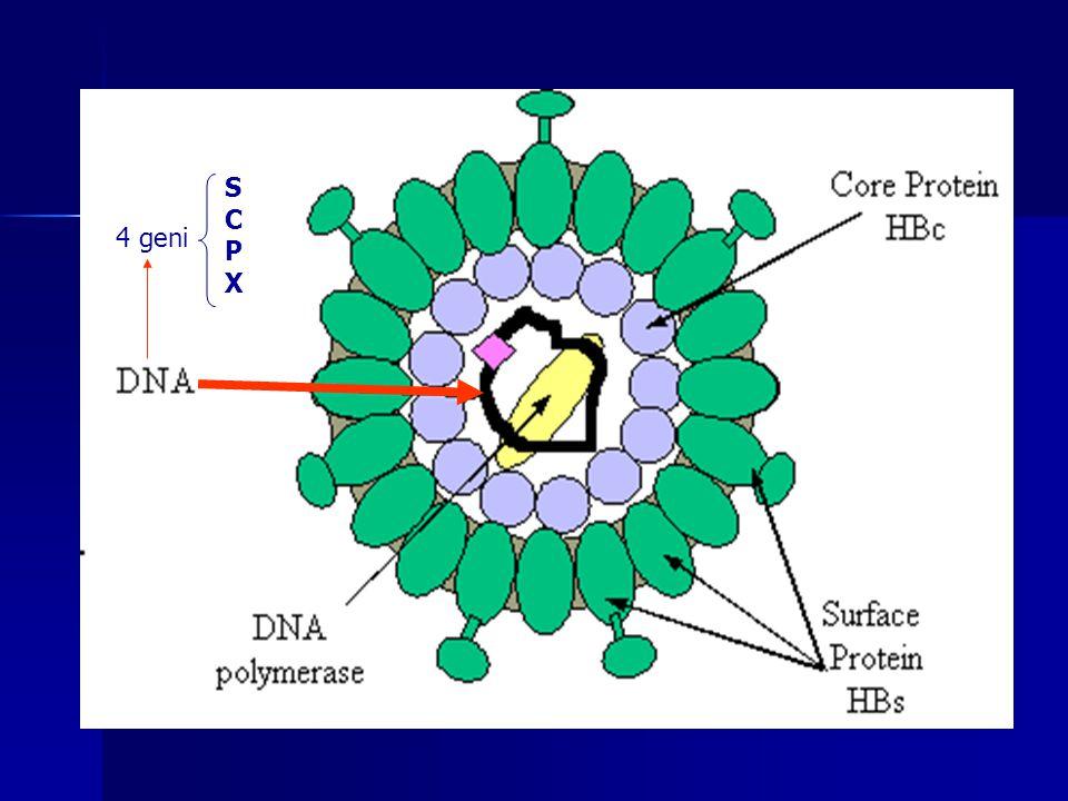 S C P X 4 geni