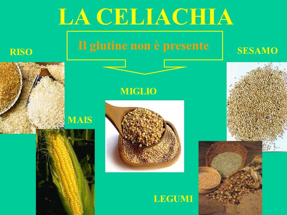 LA CELIACHIA Il glutine non è presente RISO SESAMO MIGLIO MAIS LEGUMI