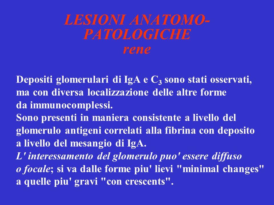 LESIONI ANATOMO-PATOLOGICHE rene