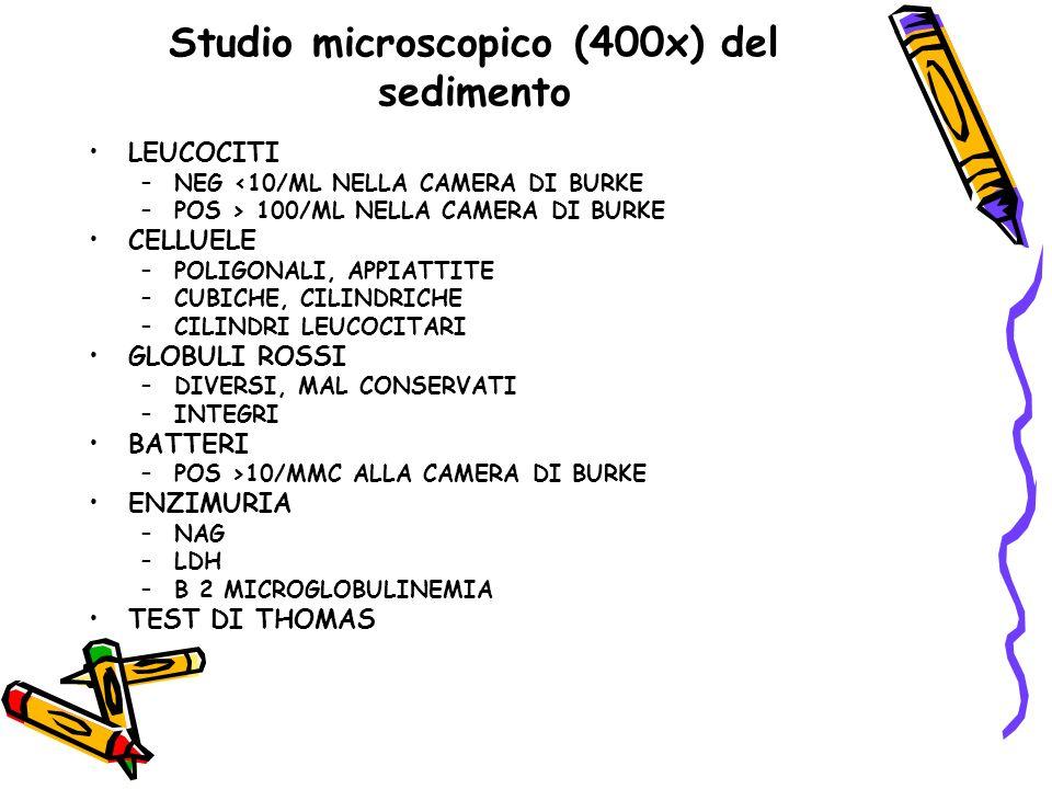 Studio microscopico (400x) del sedimento