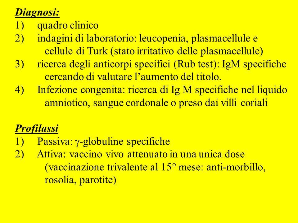 Diagnosi:1) quadro clinico. 2) indagini di laboratorio: leucopenia, plasmacellule e cellule di Turk (stato irritativo delle plasmacellule)