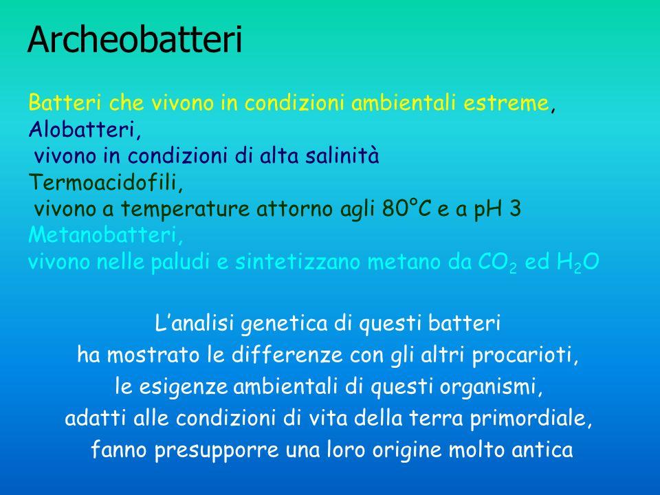Archeobatteri Batteri che vivono in condizioni ambientali estreme,