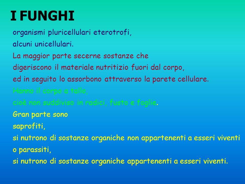 I FUNGHI organismi pluricellulari eterotrofi, alcuni unicellulari.