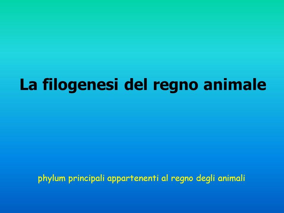 La filogenesi del regno animale