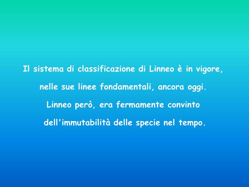 Il sistema di classificazione di Linneo è in vigore,