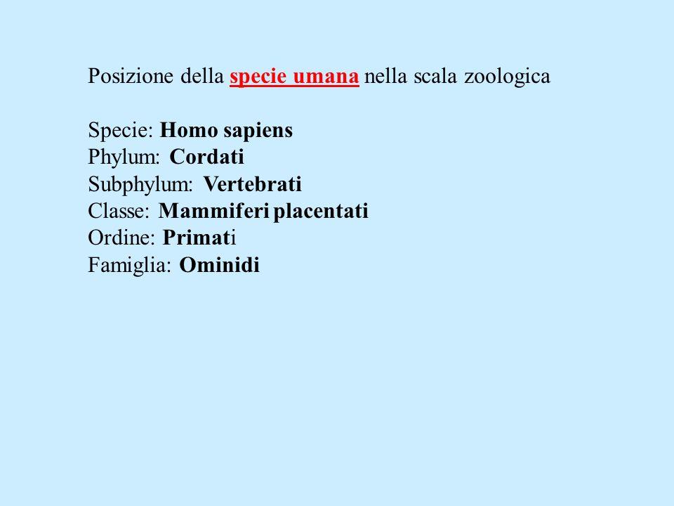 Posizione della specie umana nella scala zoologica