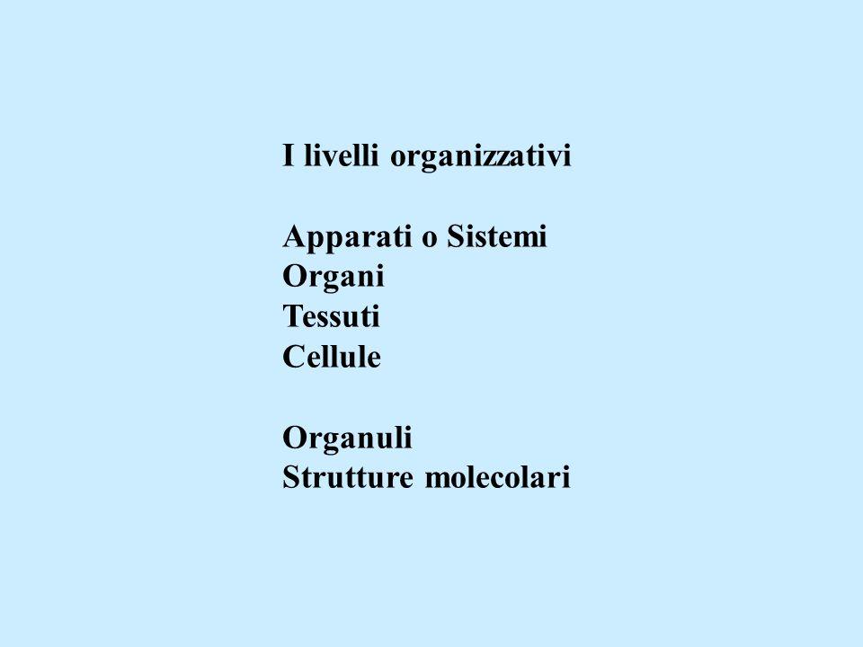 I livelli organizzativi