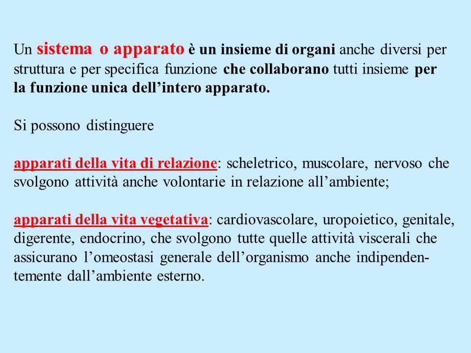 Un sistema o apparato è un insieme di organi anche diversi per
