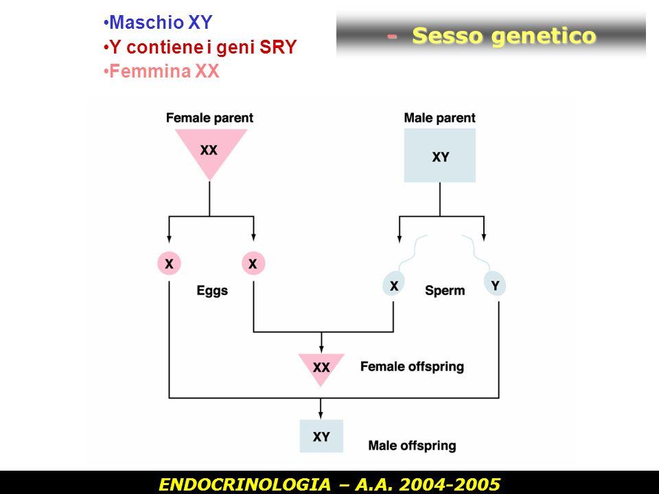 - Sesso genetico Maschio XY Y contiene i geni SRY Femmina XX
