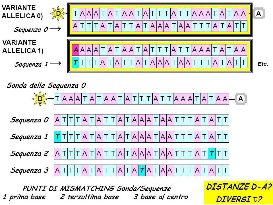 DISTANZE D-A DIVERSI t VARIANTE ALLELICA 0) A T D ALLELICA 1)