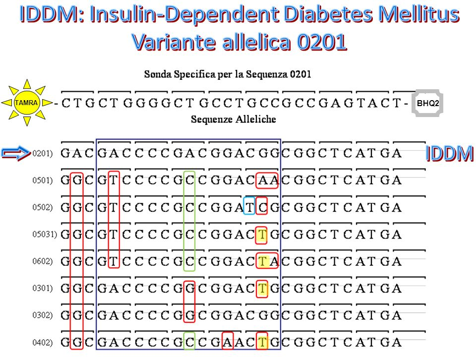 IDDM: Insulin-Dependent Diabetes Mellitus