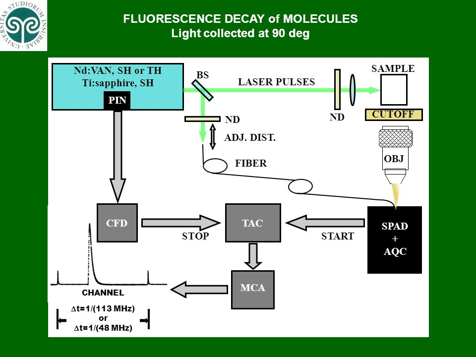 FLUORESCENCE DECAY of MOLECULES