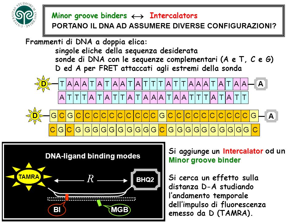 DNA-ligand binding modes