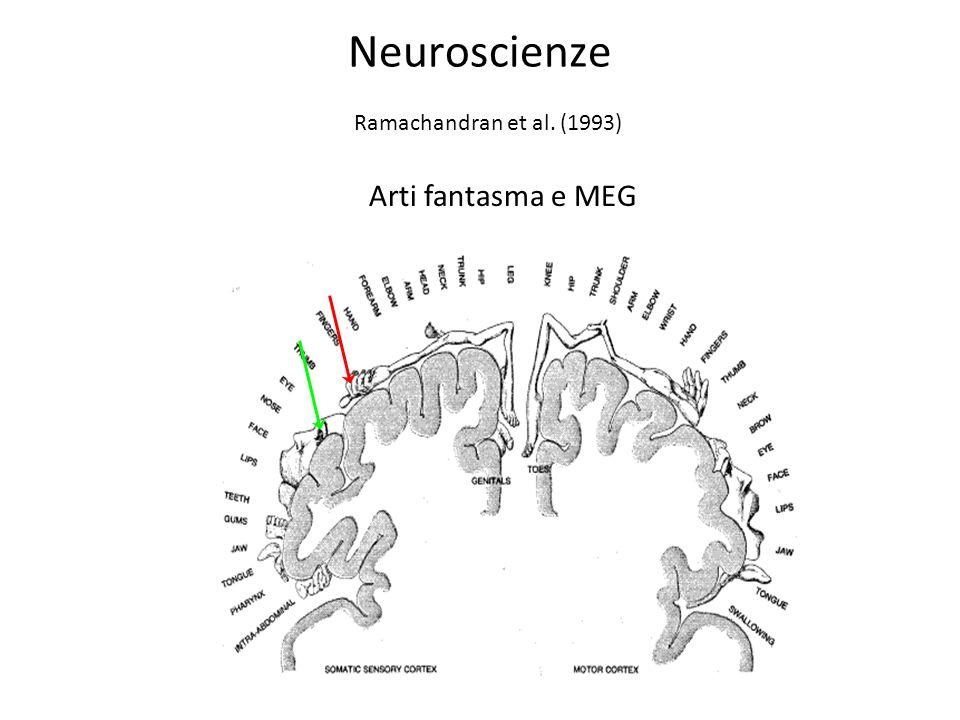 Neuroscienze Ramachandran et al. (1993) Arti fantasma e MEG