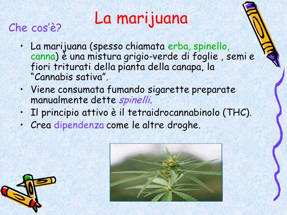 La marijuana Che cos'è