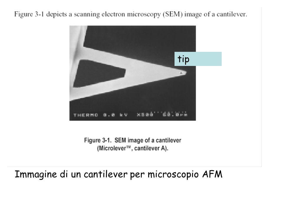 tip Immagine di un cantilever per microscopio AFM