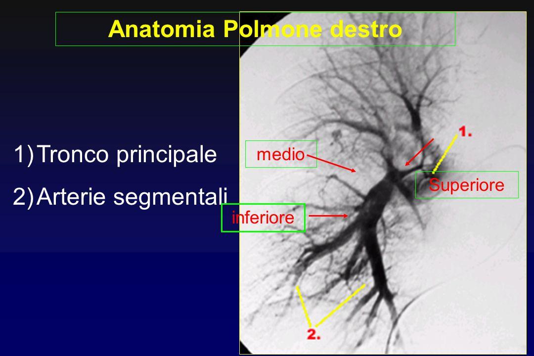 Anatomia Polmone destro